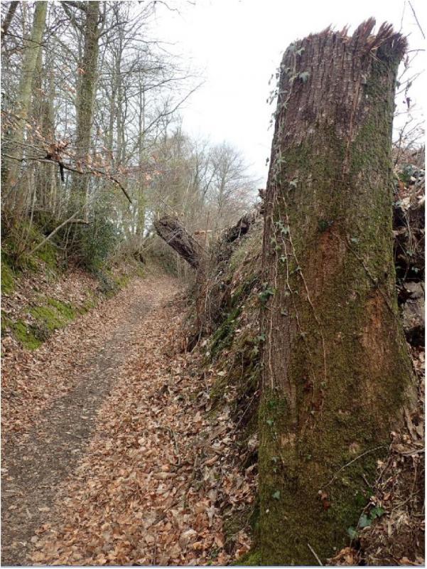 Chemin colombiers carelles haie detruite