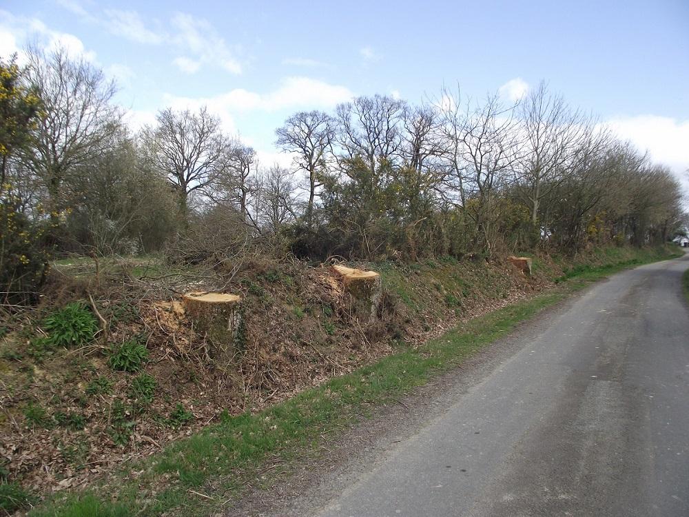 Les arbres ici sont du domaine privé de la commune